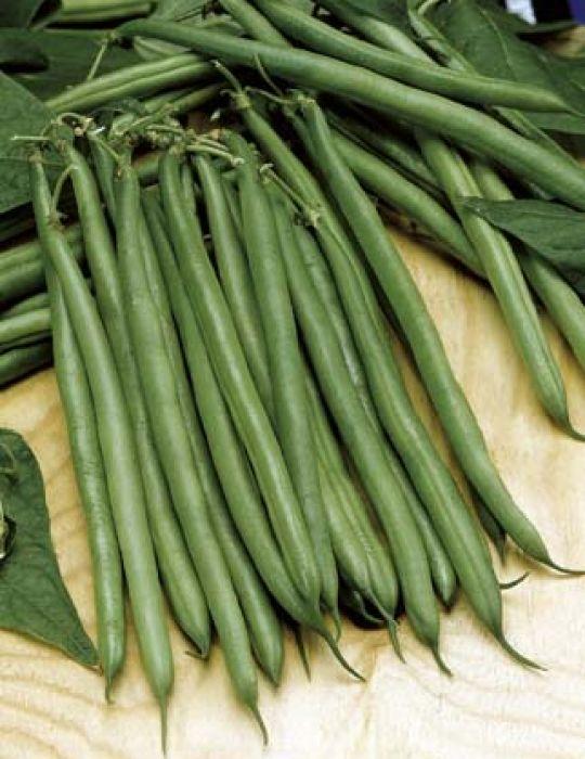 Bean, Dwarf Snap Bean Organic