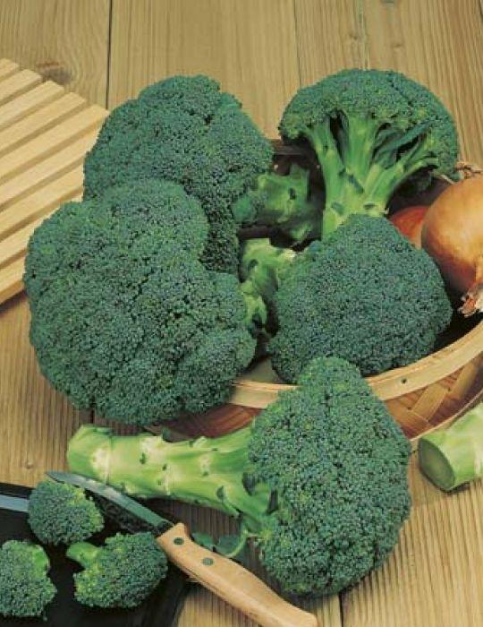 Broccoli Zen F1