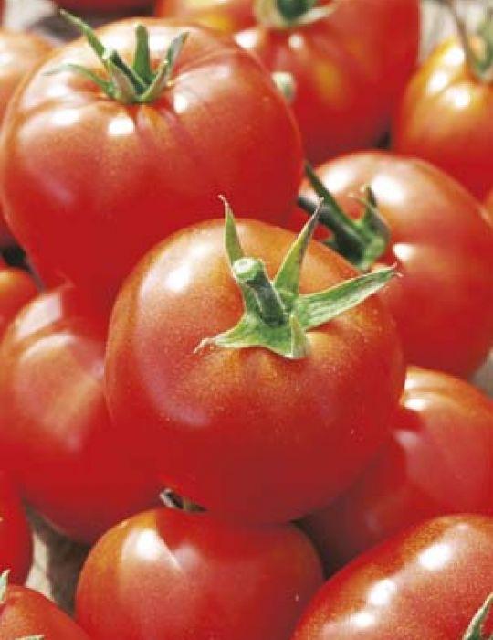 Tomato Siberian