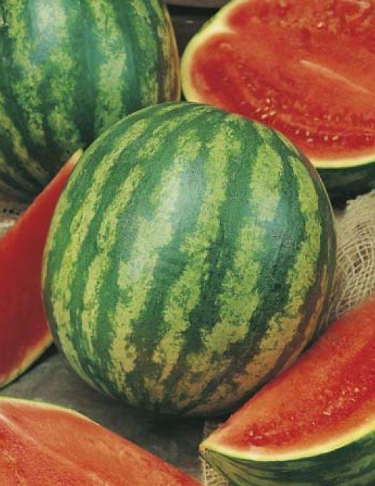 Watermelon Allsweet