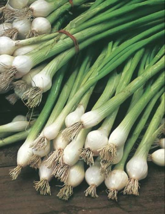 Spring Onion White Lisbon VALUE PACK