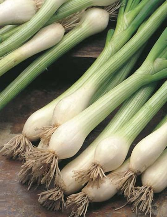 Spring Onion Bunching Nebuka ORGANIC