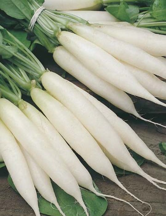 Radish Long White Icicle