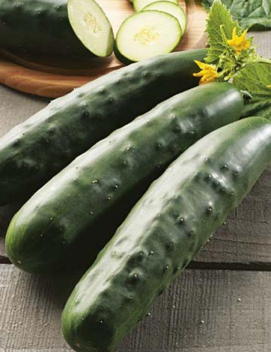 Cucumber Marketmore ORGANIC