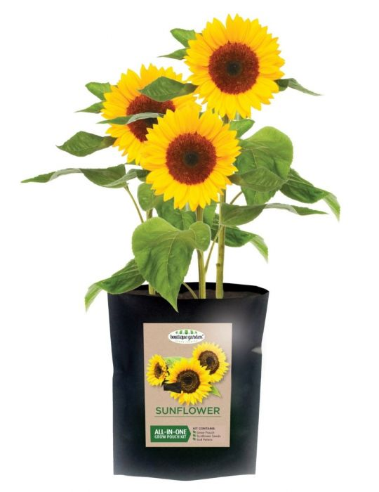 Sunflower - Grow Pouch Kit