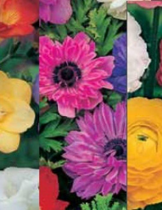 Garden Favourites Collection