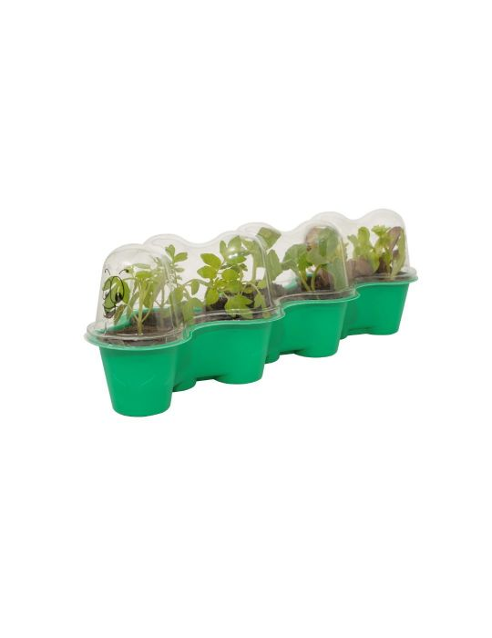 Little Gardeners Caterpillar Greenhouse Kit
