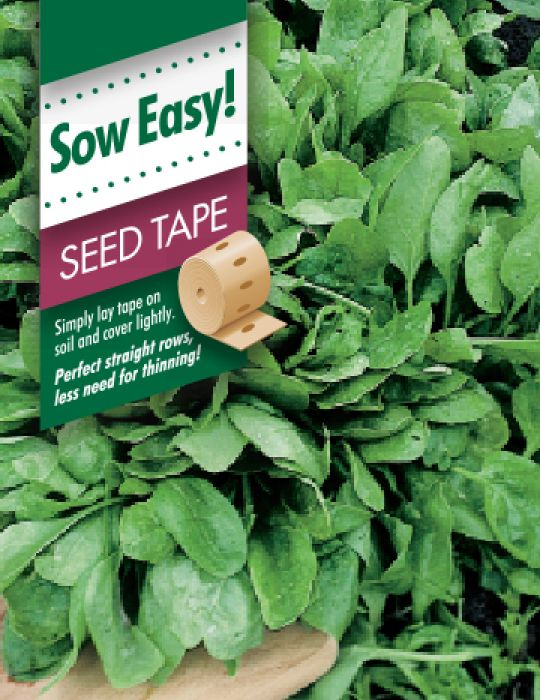 Mr Fothergill/'s Spinach Seed Tape