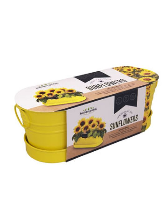 Sunflower - Windowsill Tin