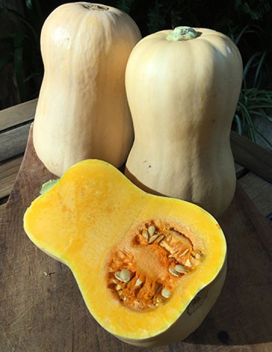 Pumpkin Butternut Pumpkin Seeds Vegetable Seeds By Mr Fothergills