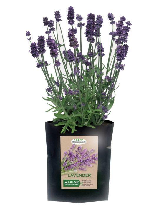 Lavender- Grow Pouch Kit