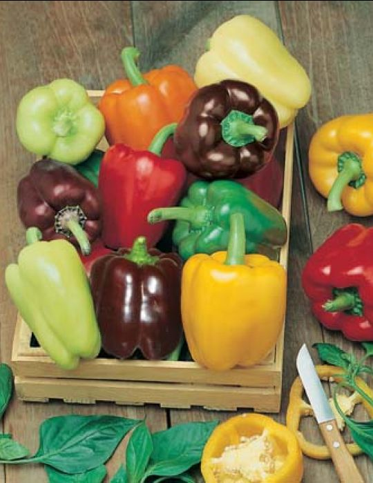 Capsicum 6 Colour Organics