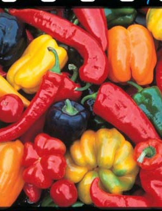 Capsicum Seven Colours HEIRLOOM