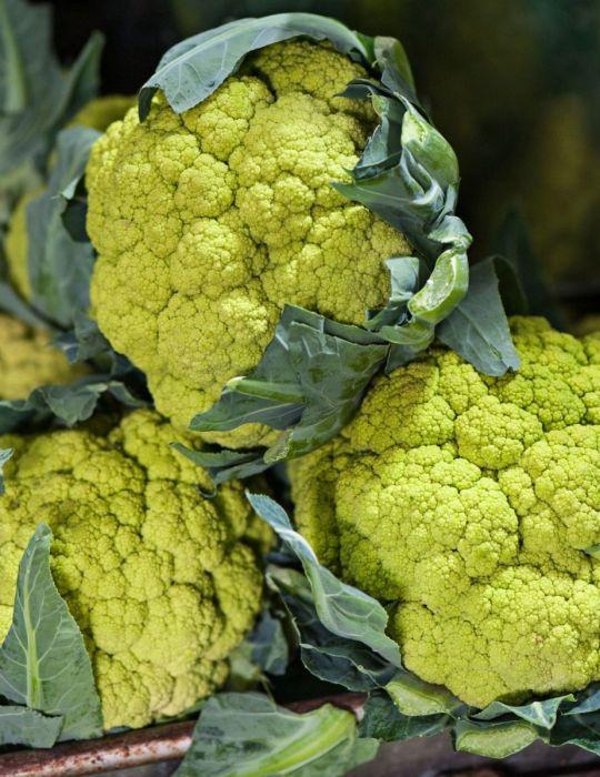 Cauliflower Verdant F1