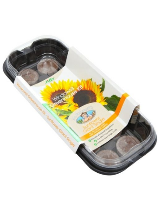 Windowsill Greenhouse Kits Sunflower