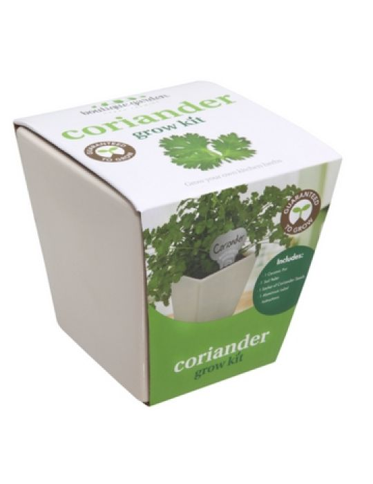 Square Ceramic Pot Coriander
