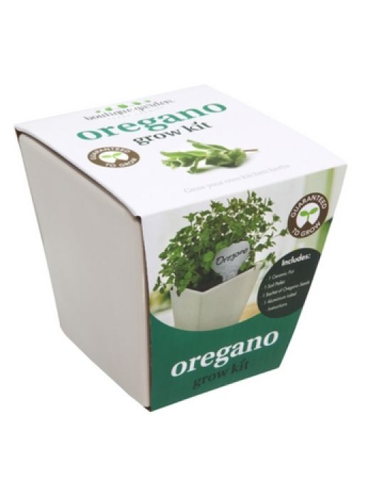 Square Ceramic Pot Oregano