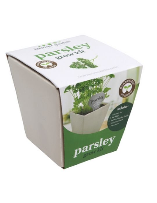 Square Ceramic Pot Parsley