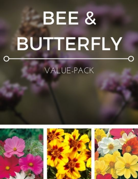 Bee & Butterfly Value Pack
