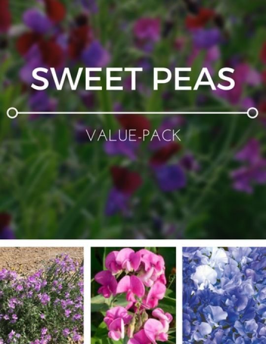 Sweet Peas Value Pack