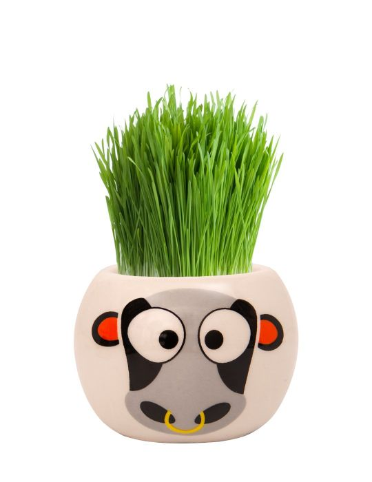 Grass Hair Kit - Farm Animals (Cow)