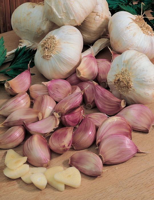 Garlic Gourmet Selection