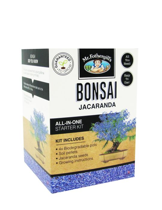 Bonsai Starter Kit - Jacaranda