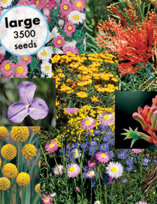 Australian Wildflowers Mix (Large) - NOT AVAILABLE TO WA, TAS & SA