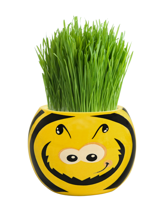 Grass Hair Kit - Friendly Bugs (Bee)