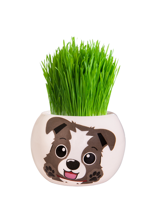 Grass Hair Kit - Puppies (Border Collie)