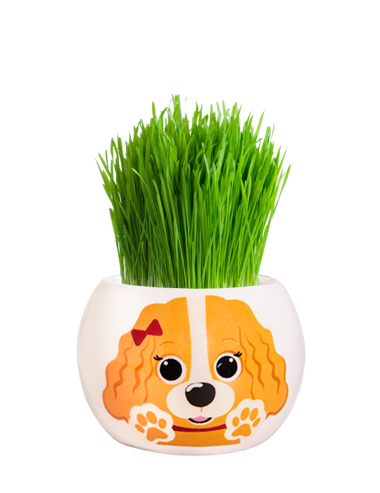 Grass Hair Kit - Puppies (Cavalier)
