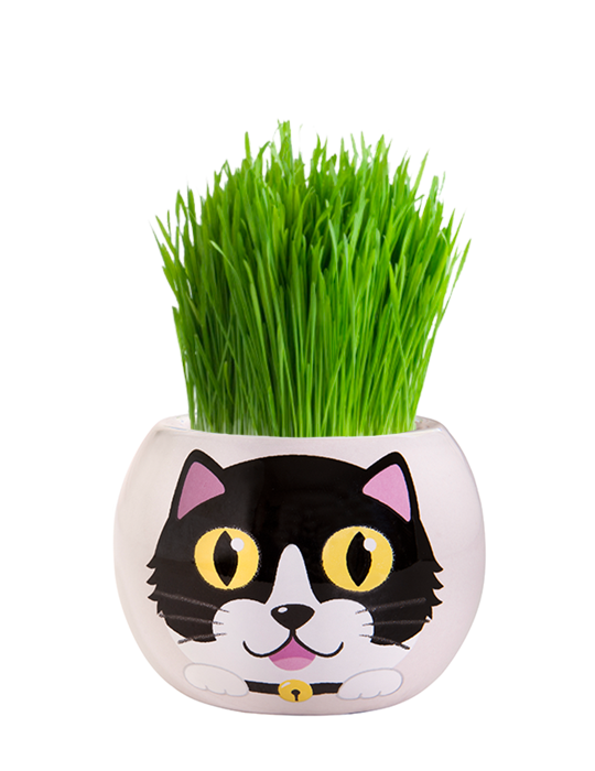 Grass Hair Kit - Kittens (Checkers)