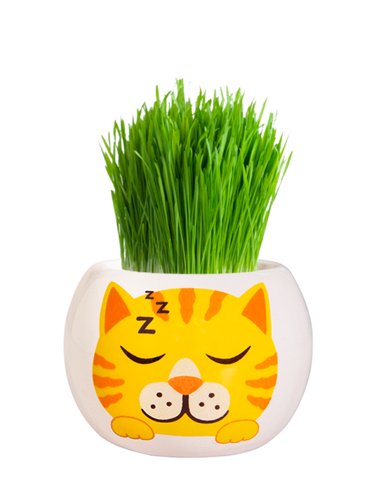 Grass Hair Kit - Kittens (Ginger)