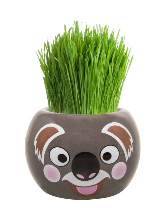 Grass Hair Kit - Aussie Animals (Koala)