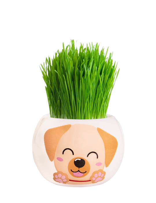Grass Hair Kit - Puppies (Labrador)