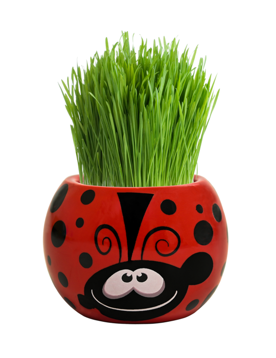 Grass Hair Kit - Friendly Bugs (Ladybug)