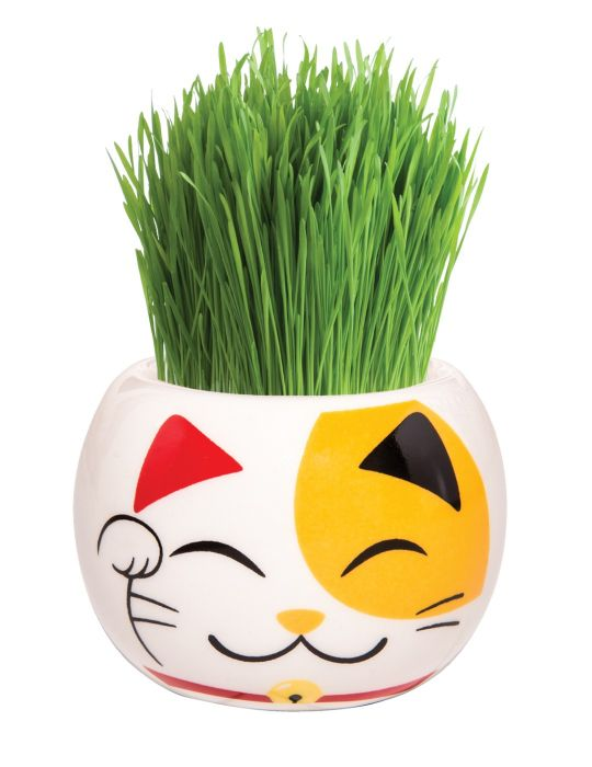 Grass Hair Kit - Hint of Asia (Lucky Cat)