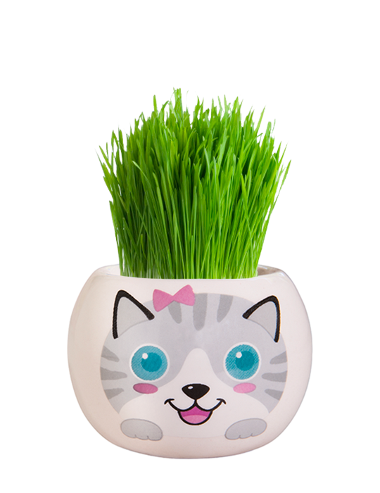 Grass Hair Kit - Kittens (Misty)