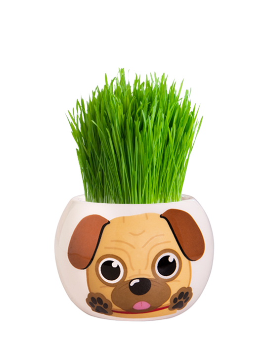 Grass Hair Kit - Puppies (Pug)