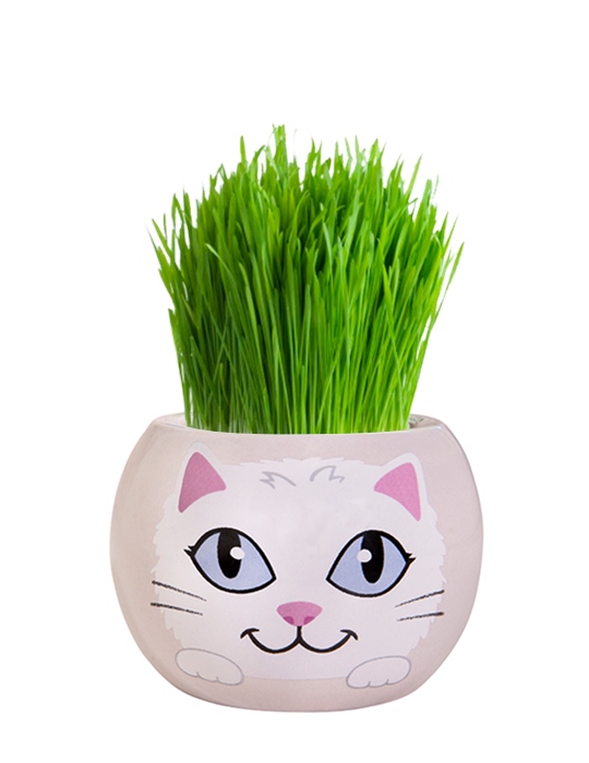 Grass Hair Kit - Kittens (Snowflake)