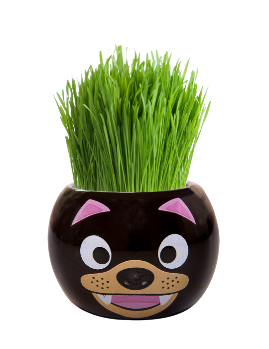 Grass Hair Kit - Aussie Animals (Tasmanian Devil)