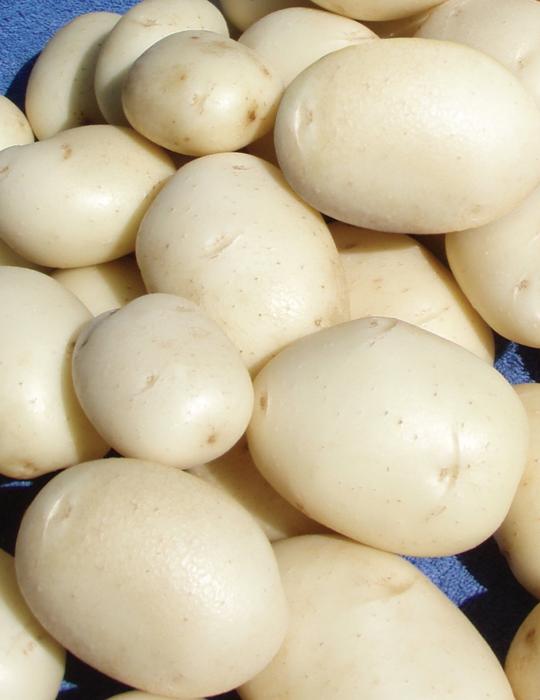 Potato White Star 1kg bag