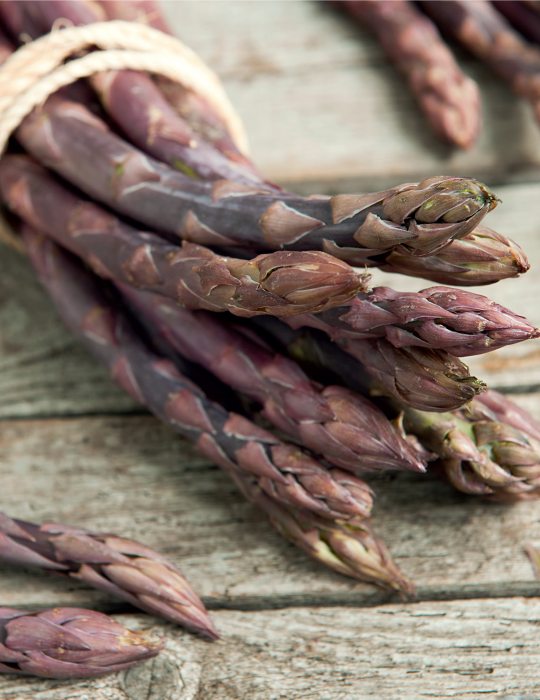 Asparagus Purple (Limited Edition)