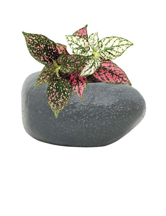 Rock Planter Indoor Grow Kit - Assorted