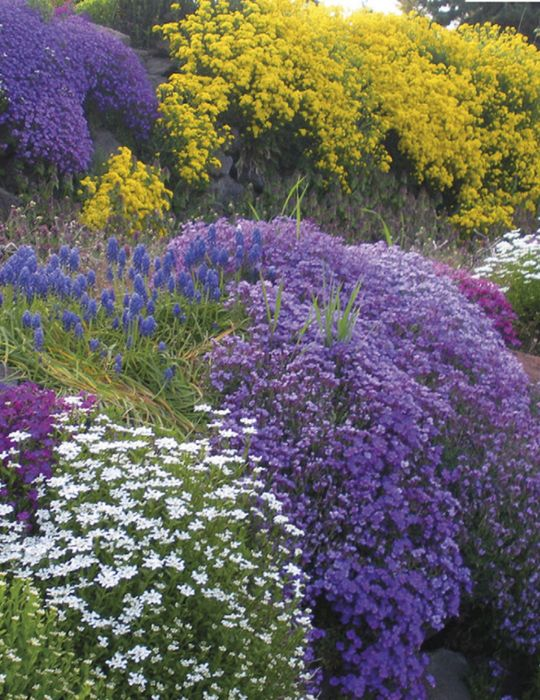 Rockery Flower Mix