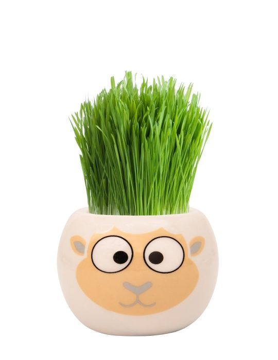 Grass Hair Kit - Farm Animals (Sheep)