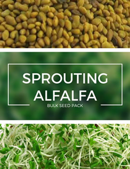 Sprouting Alfalfa - BULK BAG - NOT AVAILABLE TO WA