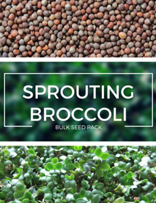 Sprouting Broccoli - BULK BAG