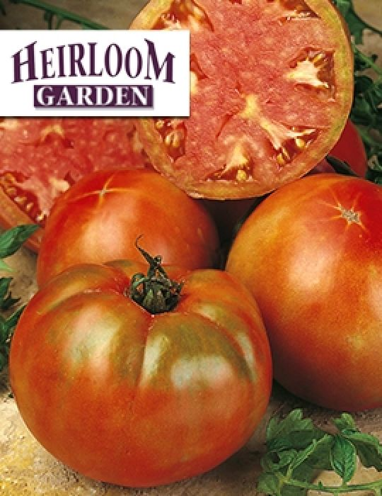 Tomato Mortgage Lifter HEIRLOOM