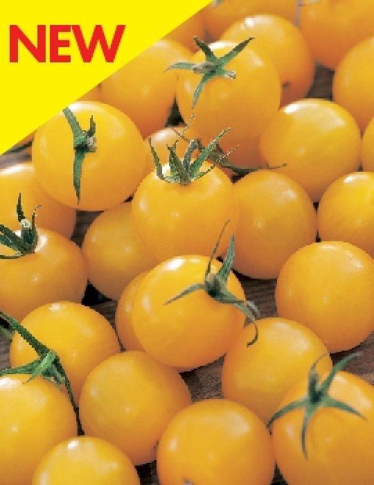 Tomato Honeybee
